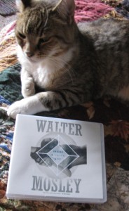 Heldig, my most evil cat.