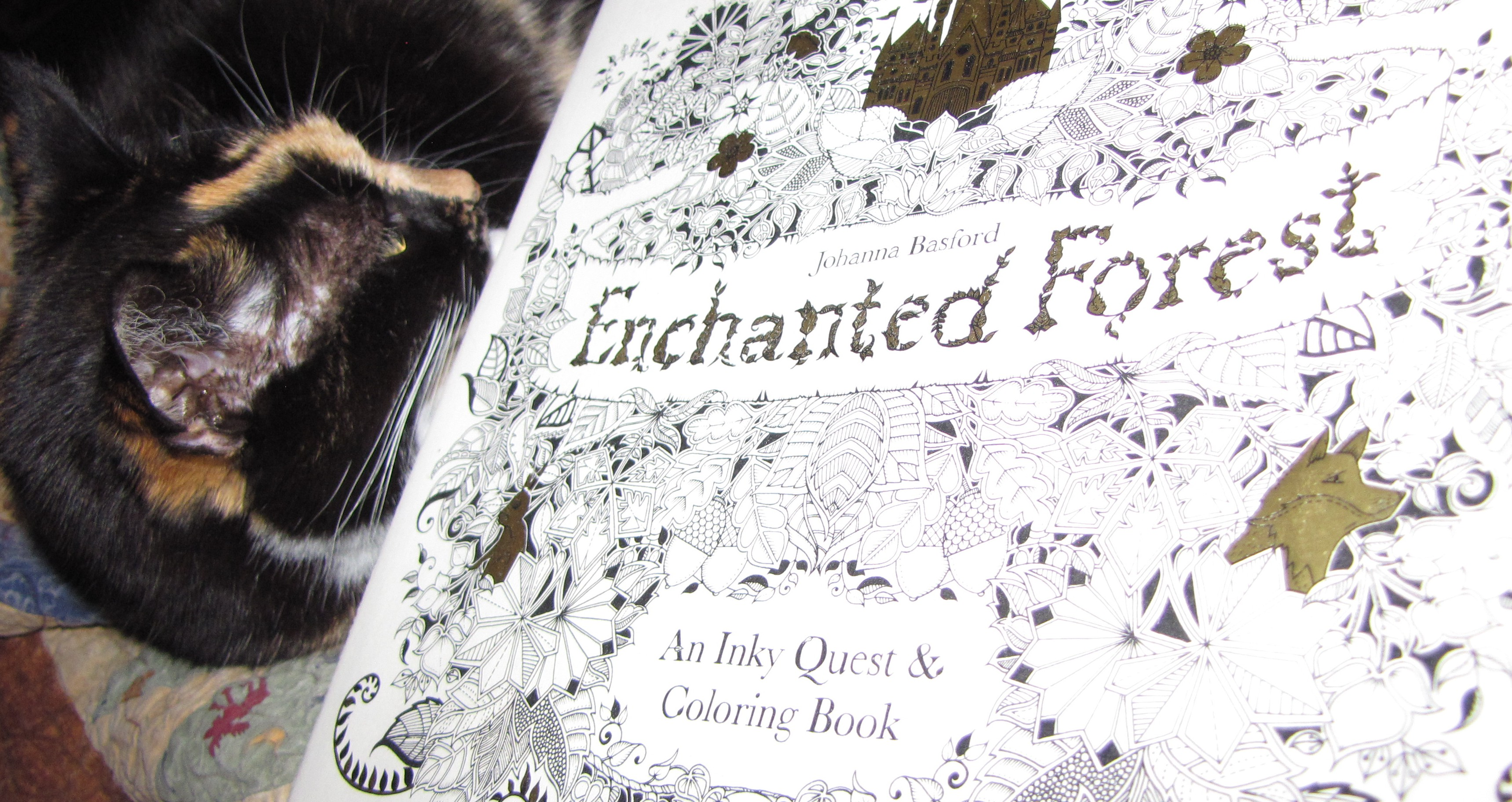 Good Cat Book What Else Does One Need Enchanted Forest